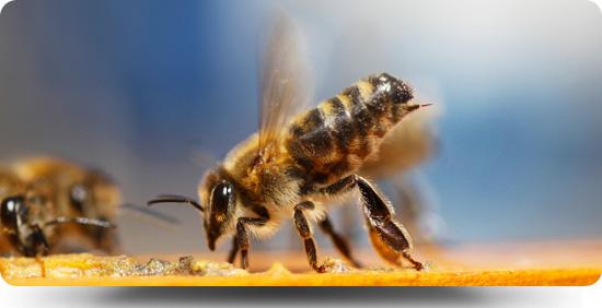 BeeHeader