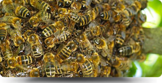 BeeHeader3