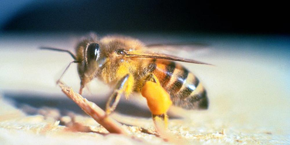 Bee Removal Carefree AZ