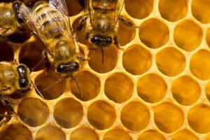 Bee Removal Florence AZ