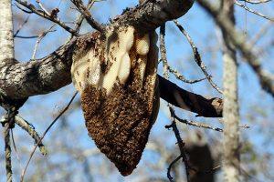 Bee Removal Glendale AZ
