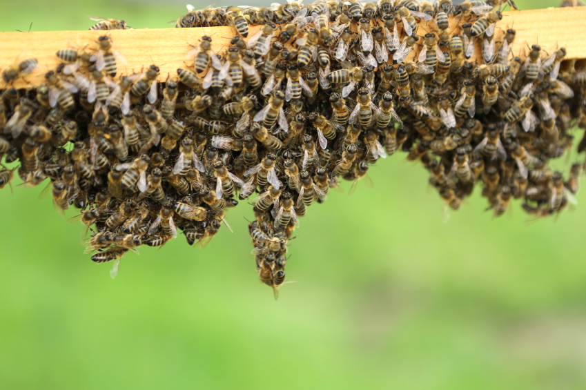 Litchfield Park Bee Removal